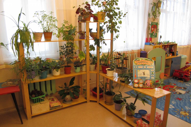 Оформление уголок природы в детском саду своими руками фото по фгос